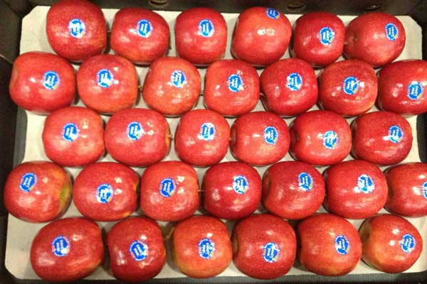 red apple trays